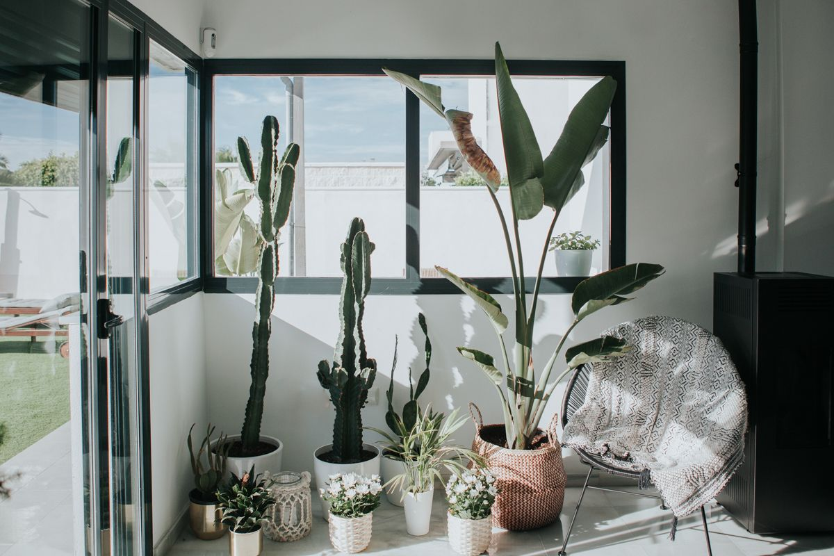 rincón botánico